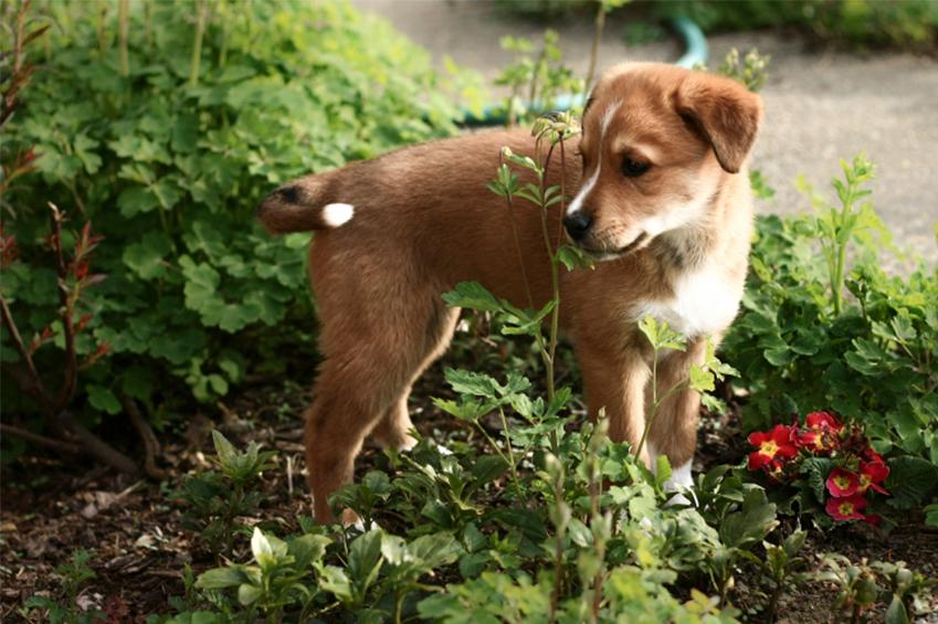 Dog Friendly Backyard Ground Cover : Dog Friendly Gardening