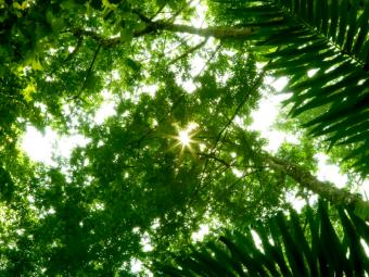 https://cf.ltkcdn.net/addiction/images/slide/122213-800x600-Sunlit-canopy.jpg