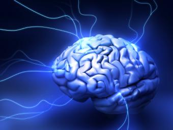 Effects of Marijuana on the Brain