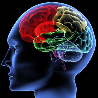 Representation of the brain