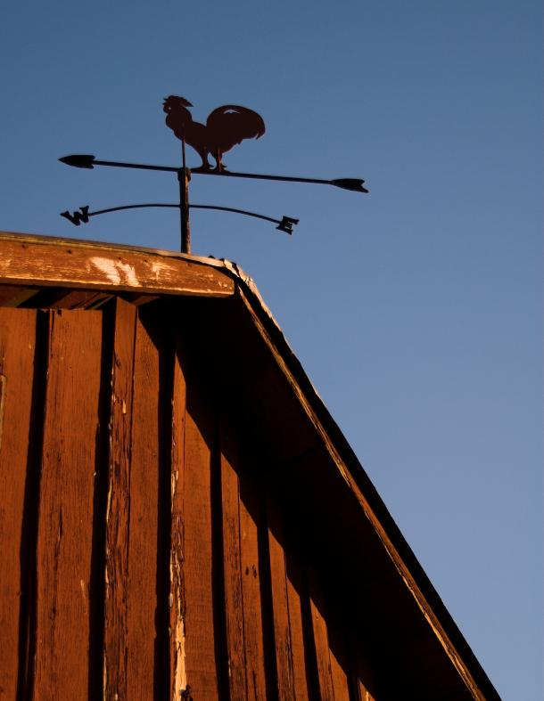 rooster_on_barn.jpg
