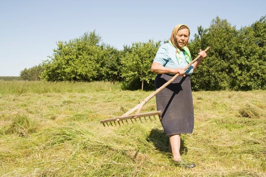 https://cf.ltkcdn.net/antiques/images/slide/138724-849x565r1-hand-held-hay-rake.jpg
