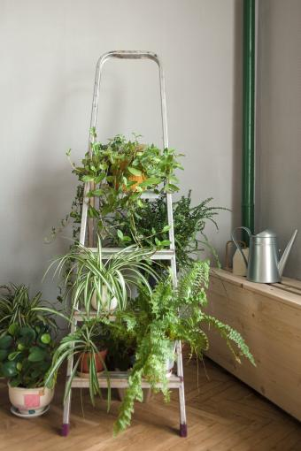 Folding ladder used as shelve for home plants in urban jungle interior