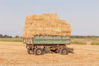 Fresh straw hay bales on a trailer in a field
