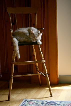 Antique high chair with cat