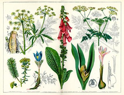 Vintage Botanical Illustrations | LoveToKnow