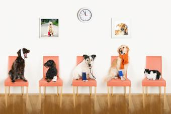 Australian Pet Insurance