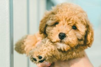 The Most Popular Dog Breeds In Australia