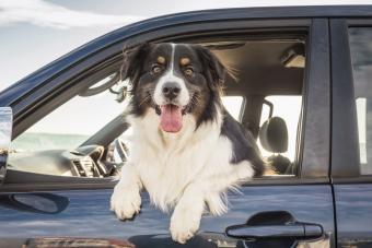 200 Barking Brilliant Australian Names for Dogs