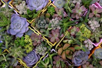 11 Drought Tolerant Plants for a Beautiful Australian Garden
