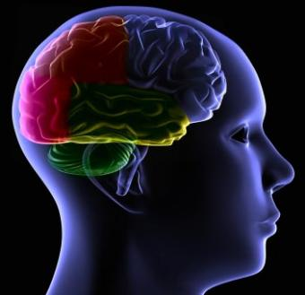 Can the Autistic Brain Heal