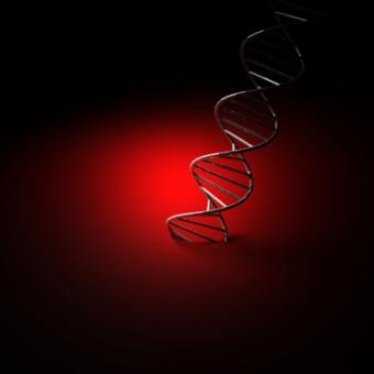 Is Autism a Genetic Disorder?