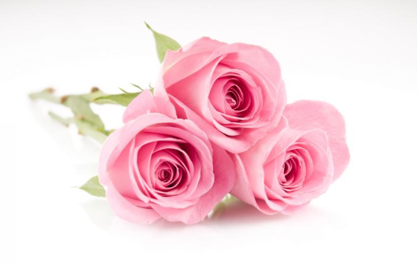 https://cf.ltkcdn.net/baby/images/slide/161149-850x536r1-roses.jpg