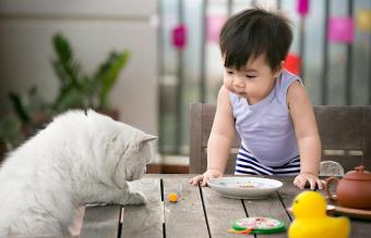 Toddler and a cat