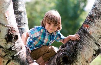 boy climbs on a tree