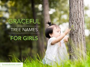 Graceful tree names for girls