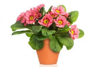 Flowers in terra cotta pot