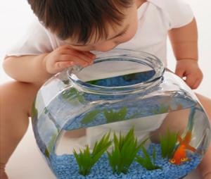 Baby looking in fish bowl