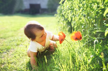 Kid looking at poppy flower