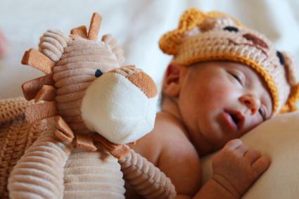 Newborn baby wears a knitted lion costume while sleeping