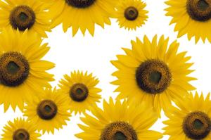 Sunflowers add a splash of color!
