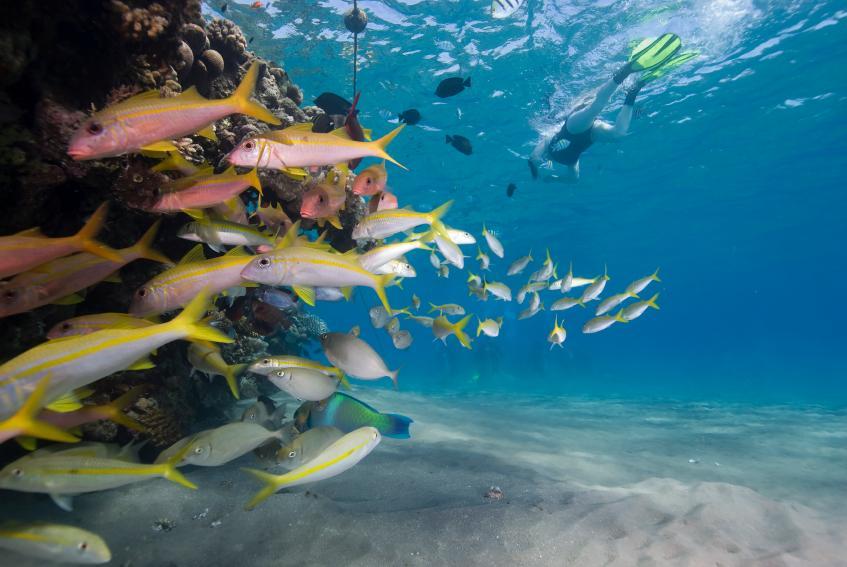 https://cf.ltkcdn.net/best/images/slide/135696-847x567-Anguilla.jpg