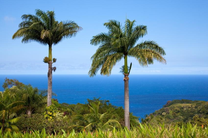 https://cf.ltkcdn.net/best/images/slide/135701-849x565-Hawaii.jpg