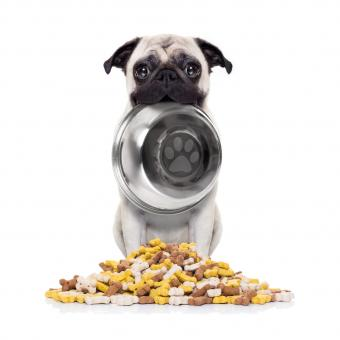 Dog-with-bowl.jpg