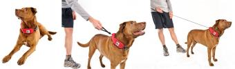 Rad Dog Release N Run Collar + Leash