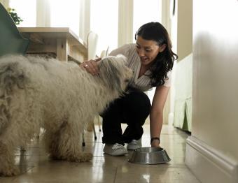 Best Rated Holistic Dog Food