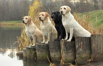 Best Rated Dog Breeds