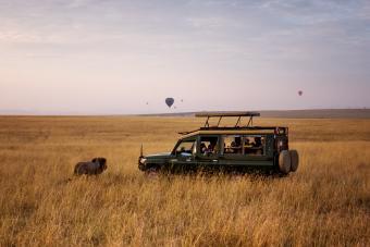 Lion and Safari Vehicle