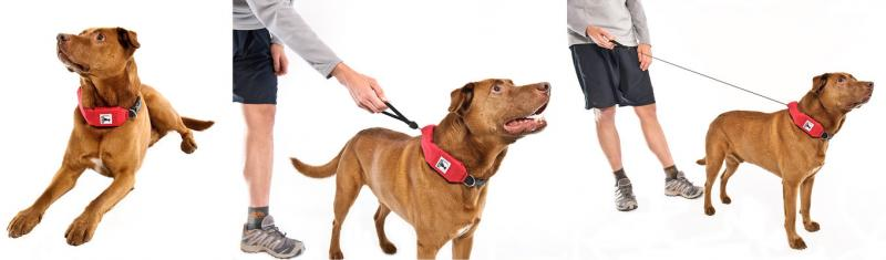 Rad Dog Release N Run Collar + Leash