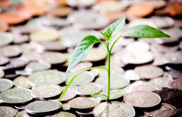 Nuevo brote creciendo de una pila de monedas