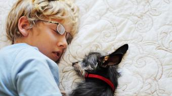 Boy and dog napping
