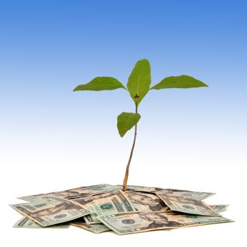 Small business concept of seedling growing in money