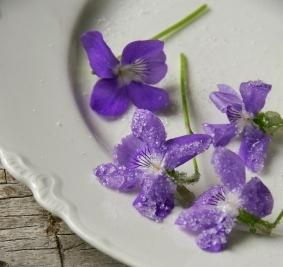 sugared violets