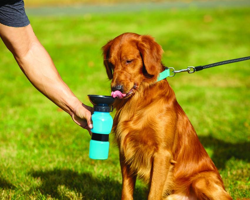 https://cf.ltkcdn.net/camping/images/slide/211070-850x680-Aqua-Dog---large-dog-drinking-.jpg