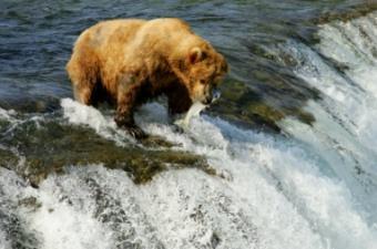 Incredible Alaska adventures await!