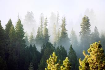 https://cf.ltkcdn.net/camping/images/slide/123220-849x565-Mt._Rainier_National_Park.jpg