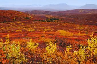 Fall in Denali National Park