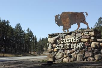 Camping at Custer State Park: An Essential Guide (to Make the Most of It)