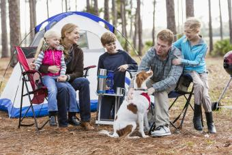 Tips for Camping With Dogs: Guide to Barking Up the Right Tree