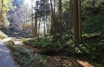 Path in the wilderness, Hocking Hills