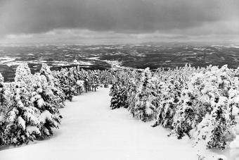 The snowy New Hampshire landscape, looking down one of the ski trails at the top of Cannon Mountain