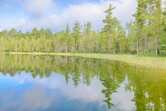 Campsites in Michigan: Explore State and National Parks