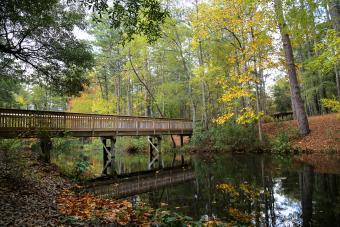 https://cf.ltkcdn.net/camping/images/slide/276288-850x566-sc-state-parks-sesquicentennial.jpg
