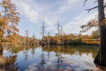 https://cf.ltkcdn.net/camping/images/slide/276446-850x566-lake-lowndes-state-park.jpg