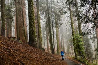 https://cf.ltkcdn.net/camping/images/slide/276806-850x566-sequoia-kings-canyon-national-park.jpg