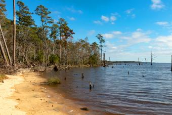https://cf.ltkcdn.net/camping/images/slide/276839-850x567-goose-creek-state-park.jpg